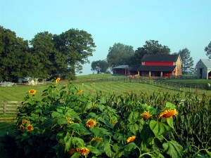 Guests are welcome to traipse through the farm's U Pick field for flowers and veggies. (Photo courtesy of Coverdale Farm Preserve)