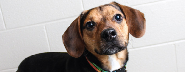 Bandit was just one of hundreds of adoptable pets that come through DHA's doors each year. Photo courtesy of Delaware Humane Association